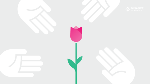 Con sốt hoa Tulip là gì?